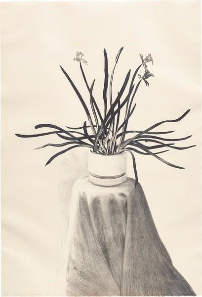 David Hockney, Potted Daffodils (1980)