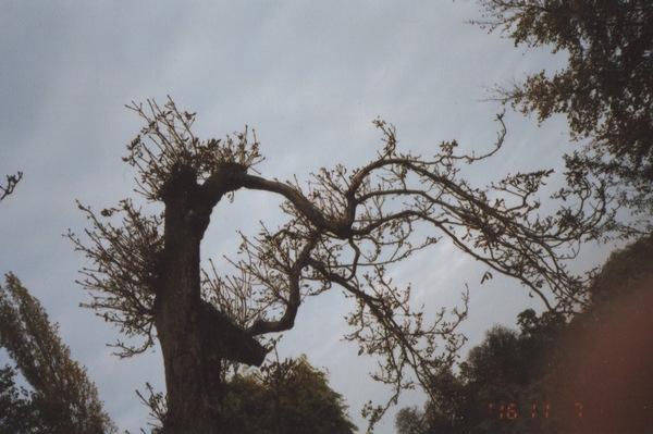 Trees-is-8.jpeg