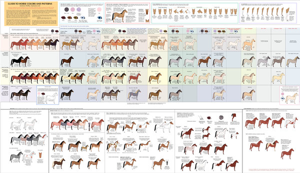 guide to horse colors and patterns by cedarseed