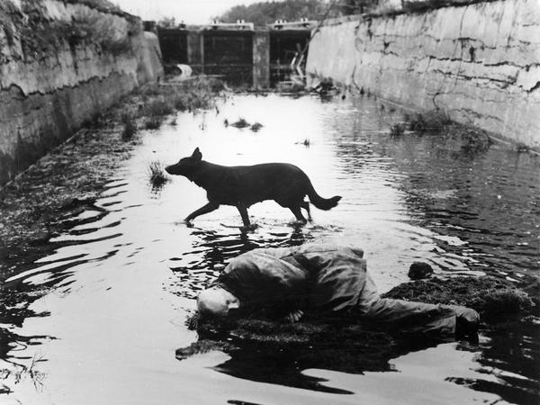 stalker-1979-002-00m-ln4-dog-running-through-water-1000x750.jpg