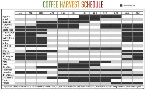19846-cafeimportscoffeeharvestschedule.jpg