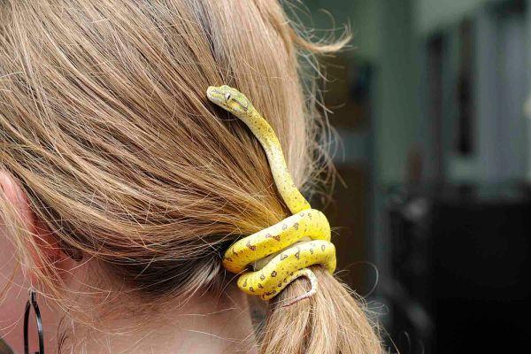 python-hair-tie.jpg