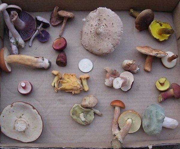 More mushroom research ✨
