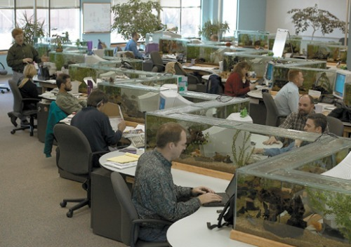 fish-tank-office.jpeg