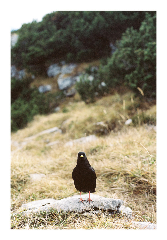 Philipp_Wortmann_Hiking_Mountains_Film_Analog_Photography19.jpg