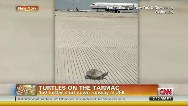 http://gothamist.com/2017/07/08/turtles_jfk_airport_delays.php