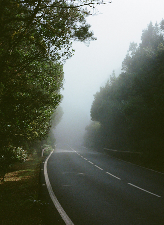 A misty road in La Gomera, with forest on either side