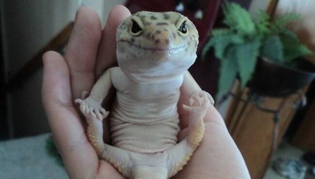 Happy Lizard (Ananda Balasana)