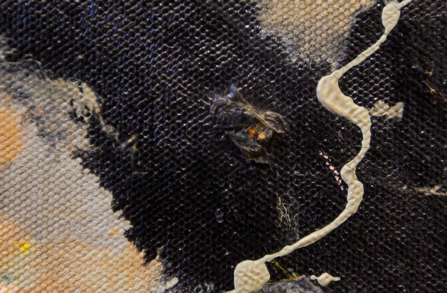 A fly, still intact, stuck in the right-hand corner of a Jackson Pollock painting