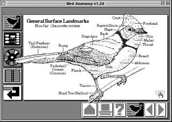 HyperCardbird-e1338220256722.jpg
