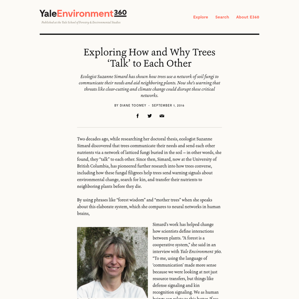 """Two decades ago, while researching her doctoral thesis, ecologist Suzanne Simard discovered that trees communicate their needs and send each other nutrients via a network of latticed fungi buried in the soil - in other words, she found, they """"talk"""" to each other."""