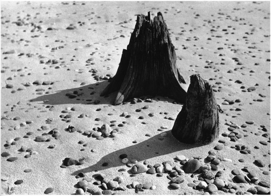 Raoul Hausmann – Baumstümpfe im Sand, Sylt, um 1930