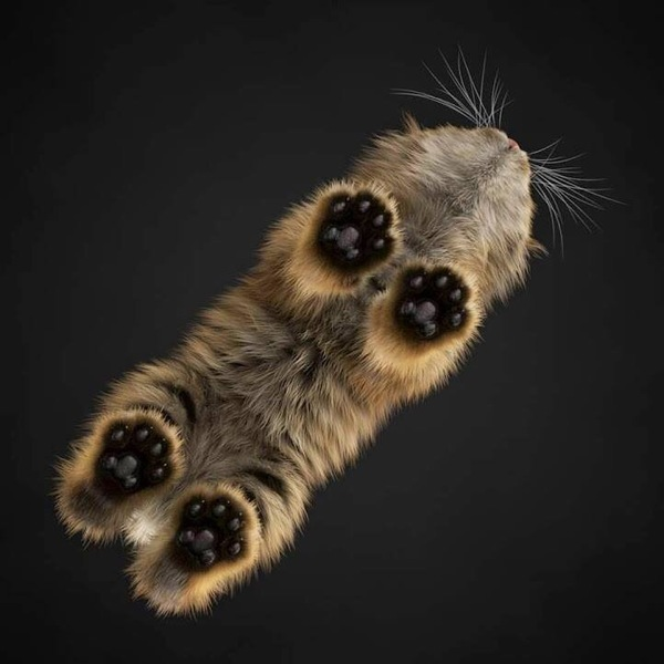 CatPaws.jpeg