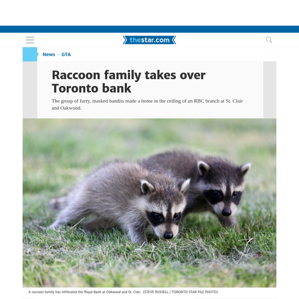 In the latest battle of Toronto's perpetual raccoon war, a family of masked bandits have shut down a midtown Toronto bank, annexing its ceiling as part of their territory. The raccoons broke into the ceiling of the RBC branch at St. Clair and Oakwood Aves., in the Hillcrest-Bracondale area, on Aug.