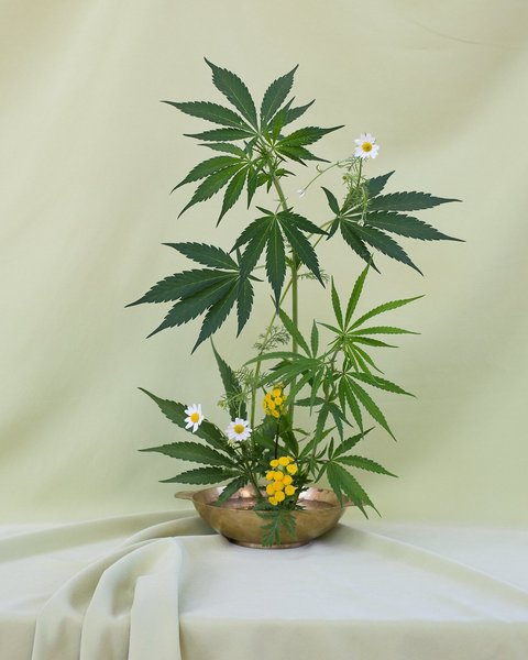 Weed ikebana in full flower, floral design by Amy Merrick, photography by Anja Charbonneau