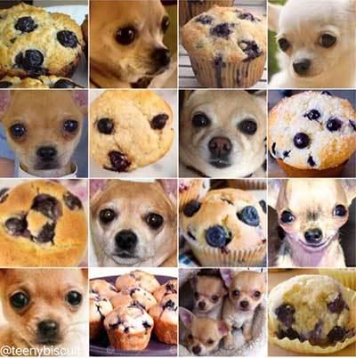 chihuahua_vs_muffin_400px_web.jpg