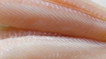 raw-fish2.jpg