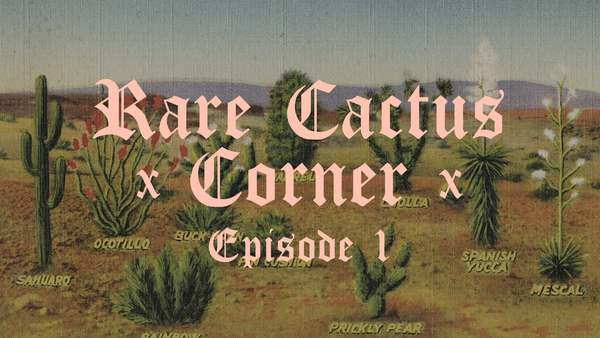 The Hot Cactus Experience: Episode One