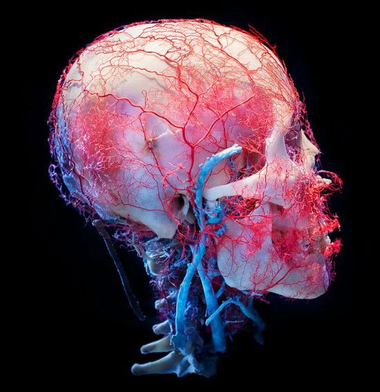 9bd511df526cee48582ed6db89465071-facial-anatomy-human-anatomy.jpg