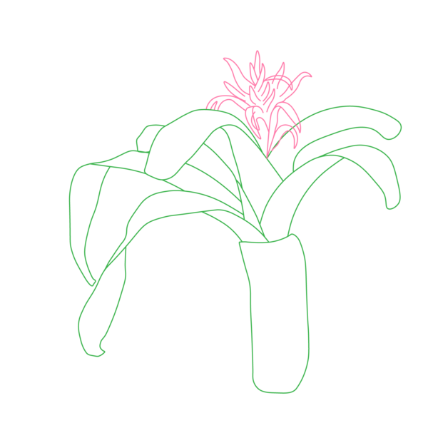 Illustrations-Plant-02.png