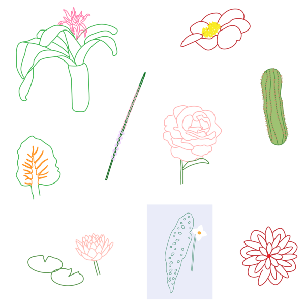Illustrations-Plant-10.png