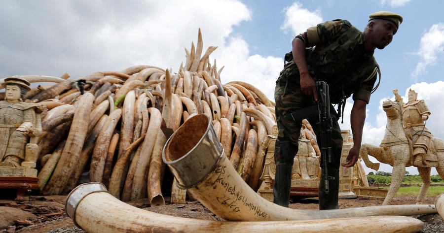 kenya-elephant-tusks.jpg