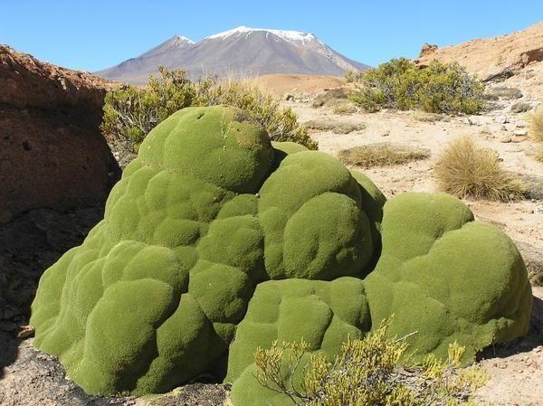 a65cb7b2f57d17035e8ba8fd9b8bbac6-desert-plants-unusual-plants.jpg