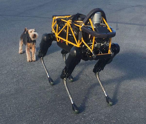 dog-and-robot-biomimicry.jpg.1000x0_q80_crop-smart.jpg