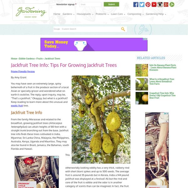 Jackfruit Tree Info: Tips For Growing Jackfruit Trees