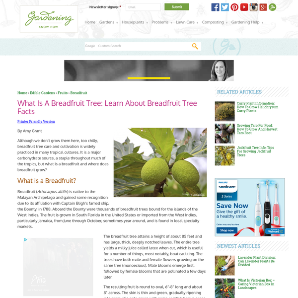 What Is A Breadfruit Tree: Learn About Breadfruit Tree Facts