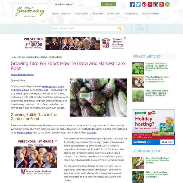 Growing Taro For Food: How To Grow And Harvest Taro Root