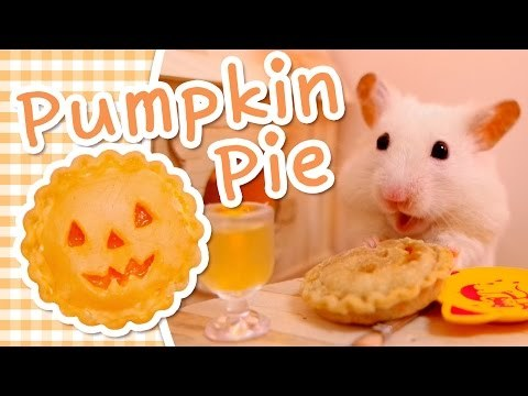 Make a delicious miniature pumpkin pie for your hamster or other small pet, perfect for Halloween or thanksgiving! Learn the recipe for this mini pumpkin pie and pumpkin juice too.