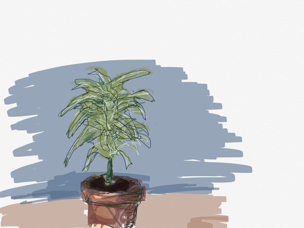 Bodo's houseplant