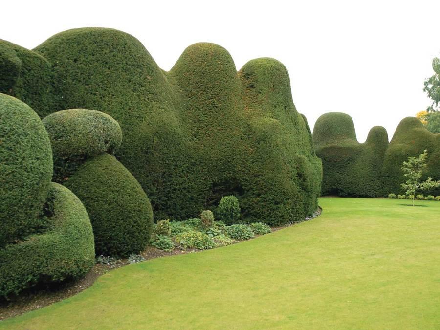 cloud-pruning-006.jpg