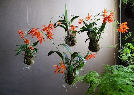 Orchids-cluster-group-mid-air.jpg