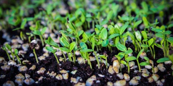 green-growth-860x430.jpg