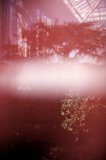 langwoodgarden-6.jpg