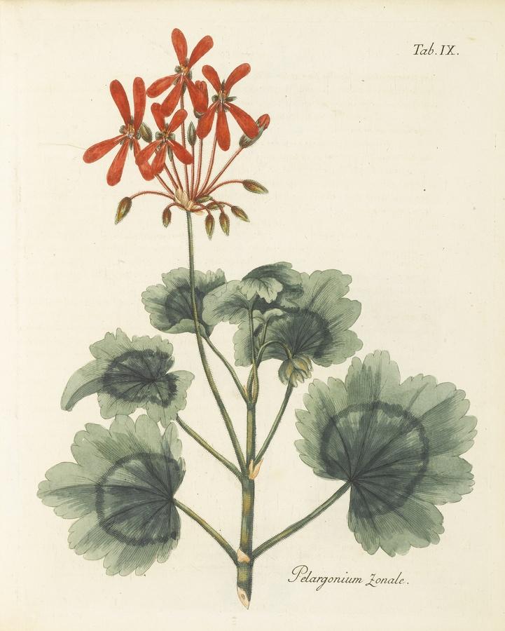 http://www.sothebys.com/en/auctions/ecatalogue/2012/books-manuscripts-n08919/lot.35.html