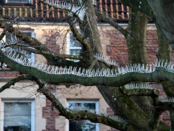tree-spike-1.jpg