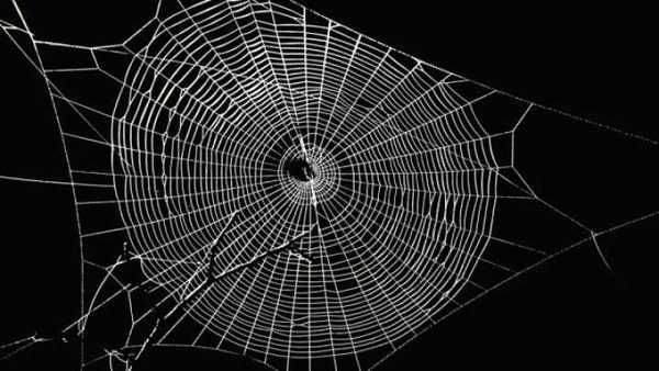 The spider's web is so completely intertwined with the life, behavior, and nature of the spider itself that we cannot separate the two.