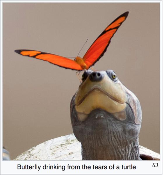 https://en.wikipedia.org/wiki/Mud-puddling