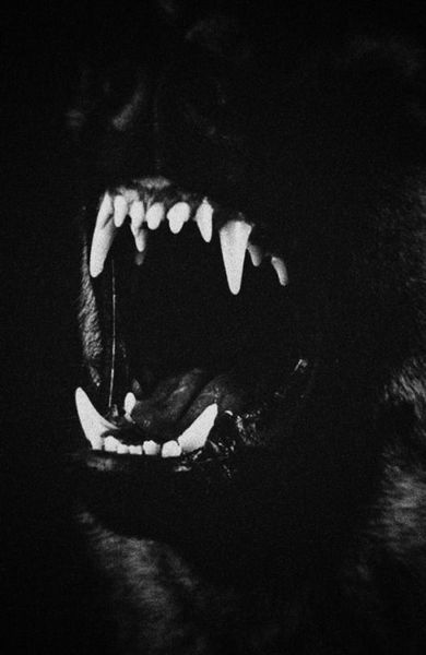 f1a80b4c1bec6d83edf4059077e9255e-black-wolf-aesthetic-claws-aesthetic.jpg