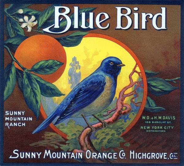 Blue-Bird.jpg