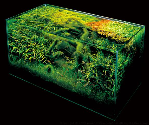 nature-aquarium-2.jpg