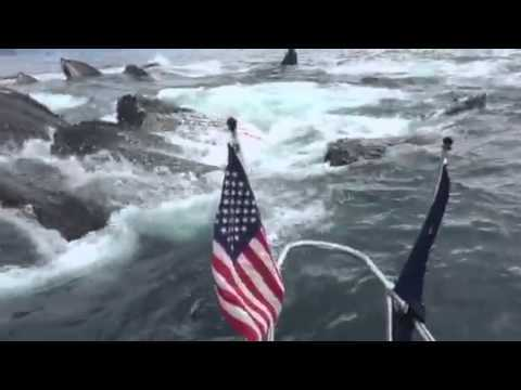 whale video shot by Brad Rich on Tony Flanders boat near Seward Alaska