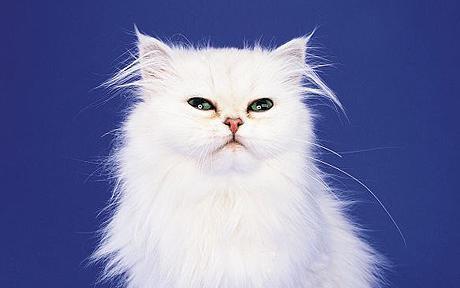 cat_1360415c.jpg