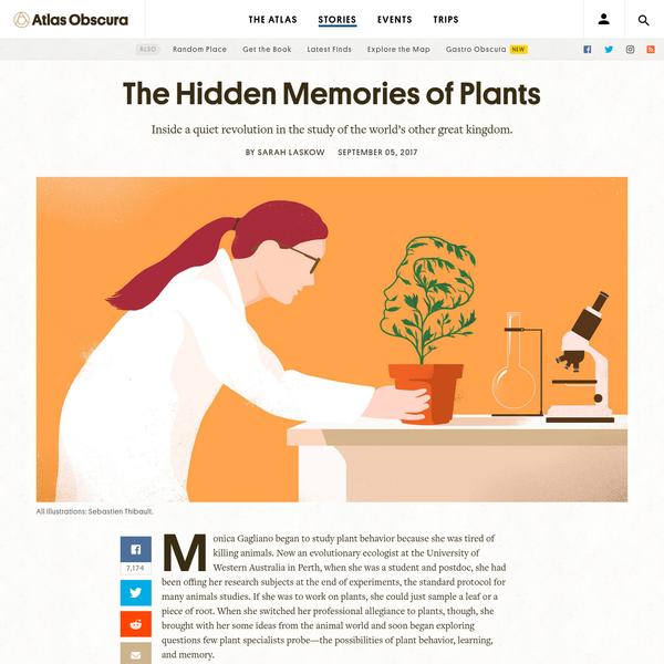 A Quiet Revolution in Botany: Plants Form Memories