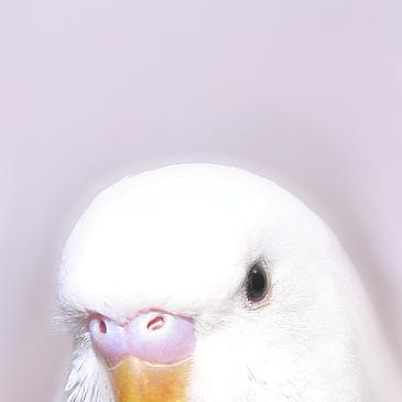 Birds tho (@BirdsThoCo) | Twitter