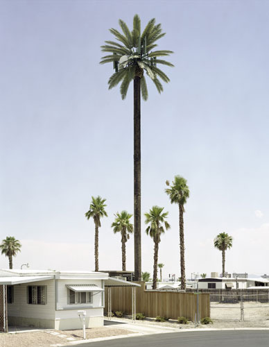 Cell phone towers are often camouflaged as trees so as not to disrupt the landscape.