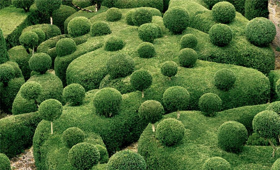topiary-3.jpg